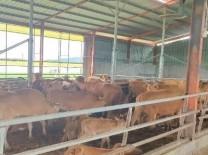 수해 피해 축산농가에 긴급 동물의료 지원