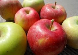 사과, 단감 등 농산물 안전관리 강화한다!