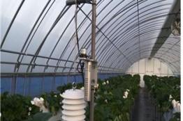 농식품부, 딸기 농가를 위한 스마트팜 영농지원 개시